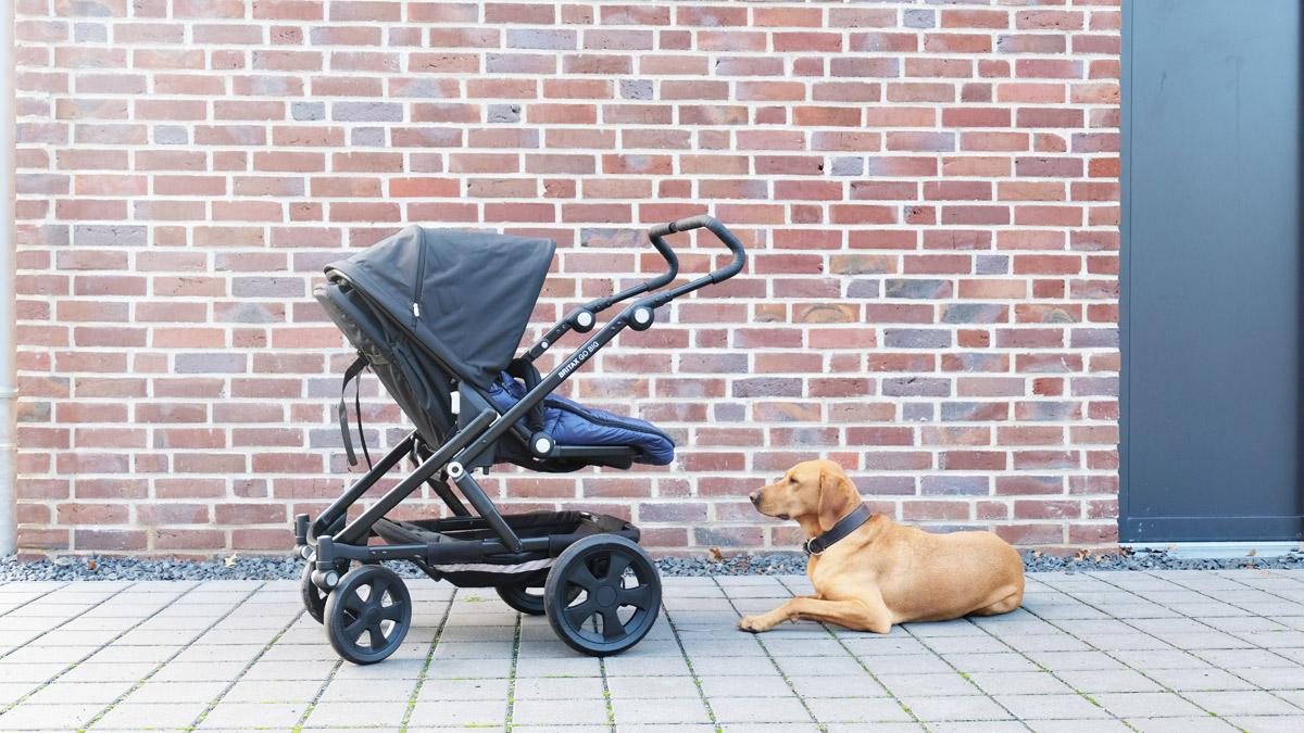 Hund Barney bewacht den Kinderwagen.