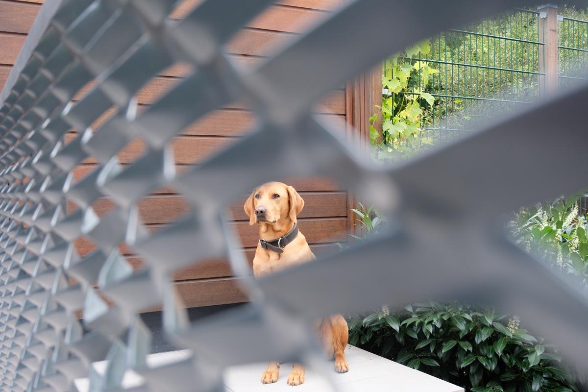 """der Hund """"Barney"""" von Familie Dietz bewacht das Grundstück."""